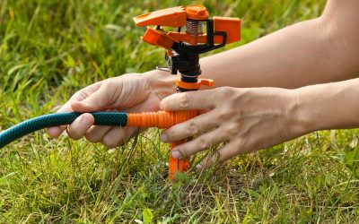 How to Maintain a Healthy Lawn All Summer
